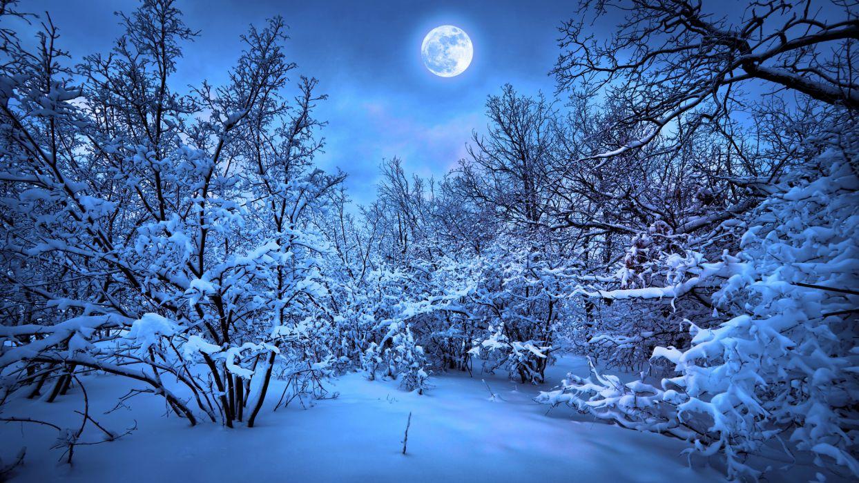 forest moon night snow winter      f wallpaper
