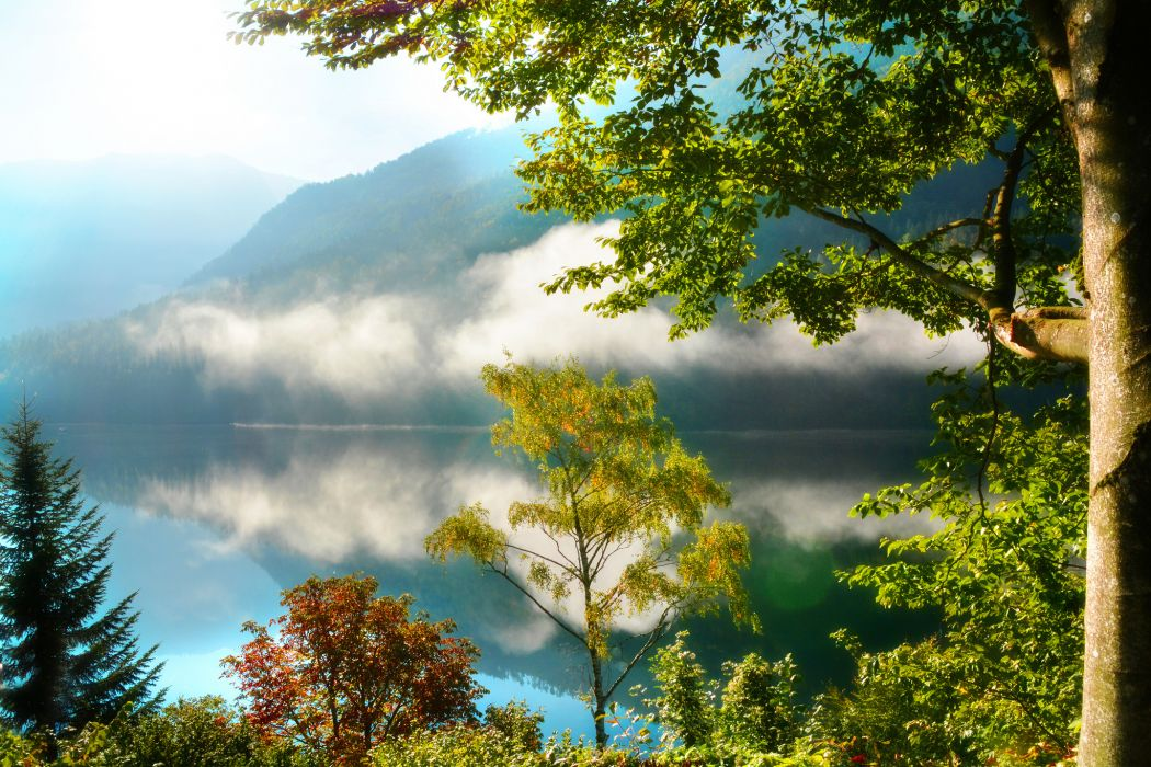 forest morning trees mountains fog autumn reflection      f wallpaper