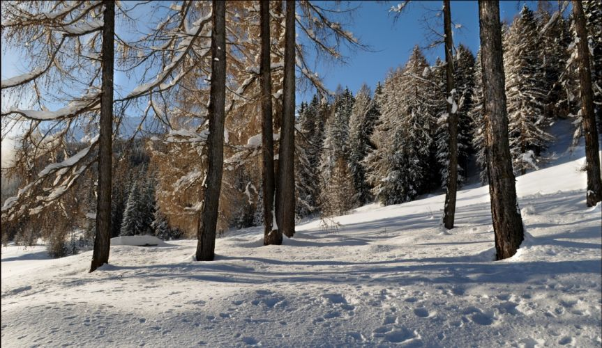 forest winter snow drifts landscape wallpaper