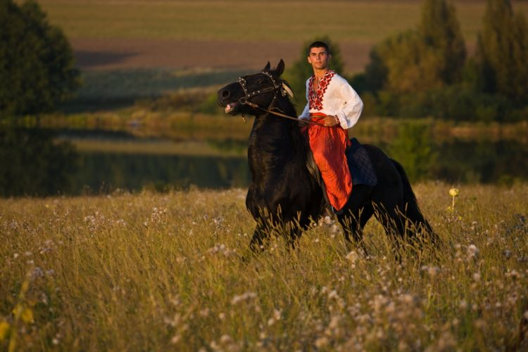 Kiev Ukraine man horse field mood wallpaper