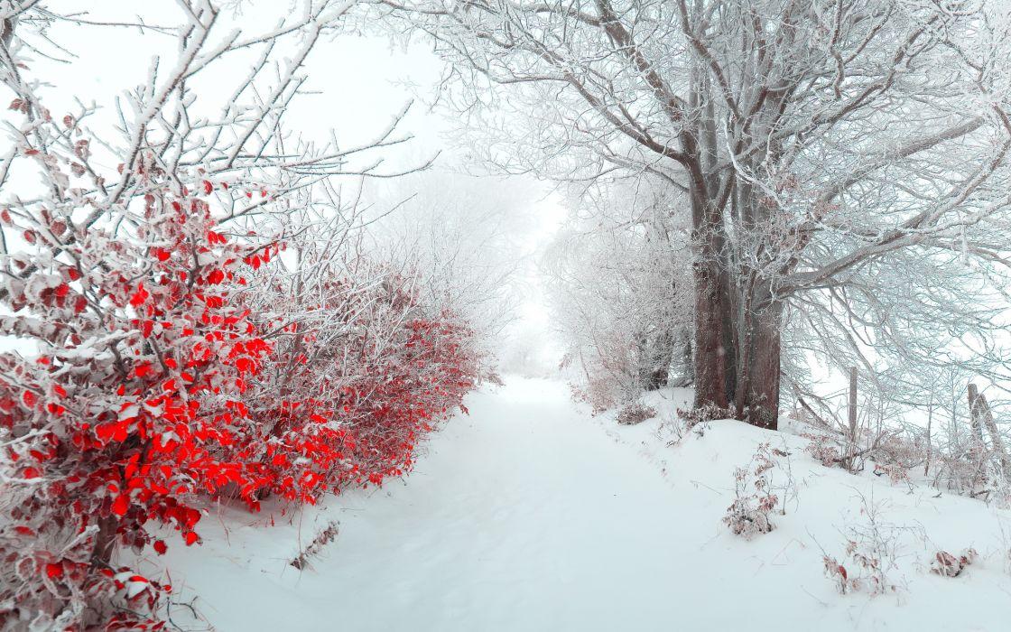 Landscape Tree Nature Beautiful Snow Winter Christmas F