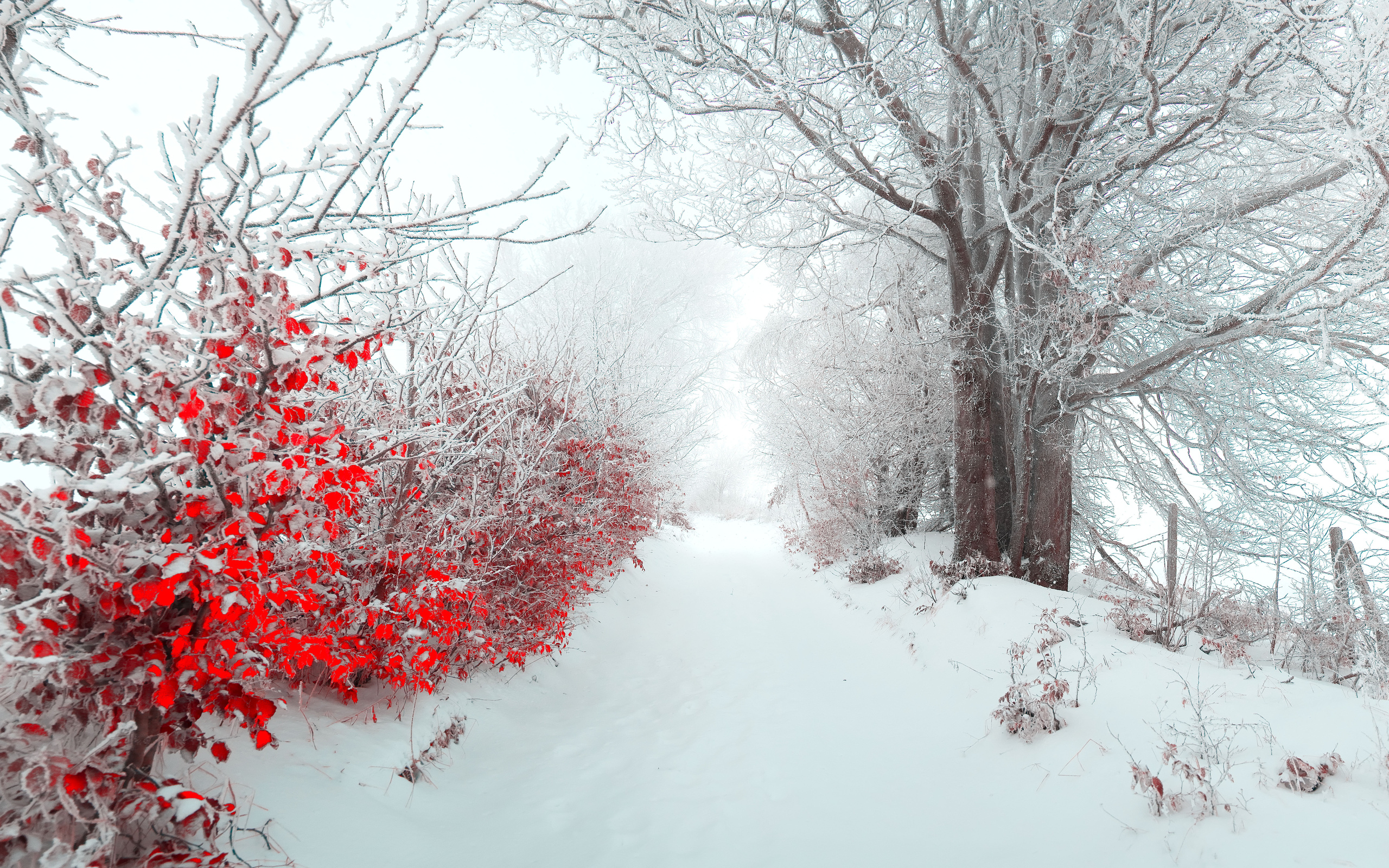 Christmas Nature Wallpaper Landscape Tree Nature