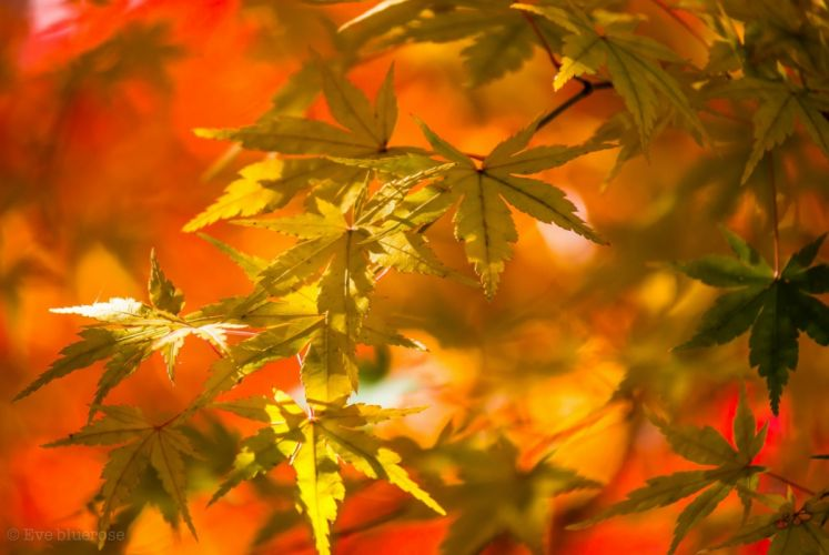 leaves yellow autumn close-up wallpaper