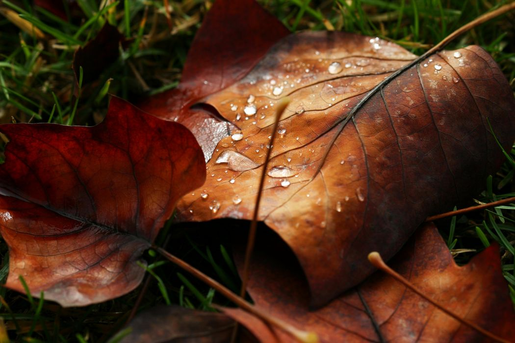 macro leaf leave drops water dew nature autumn bokeh wallpaper