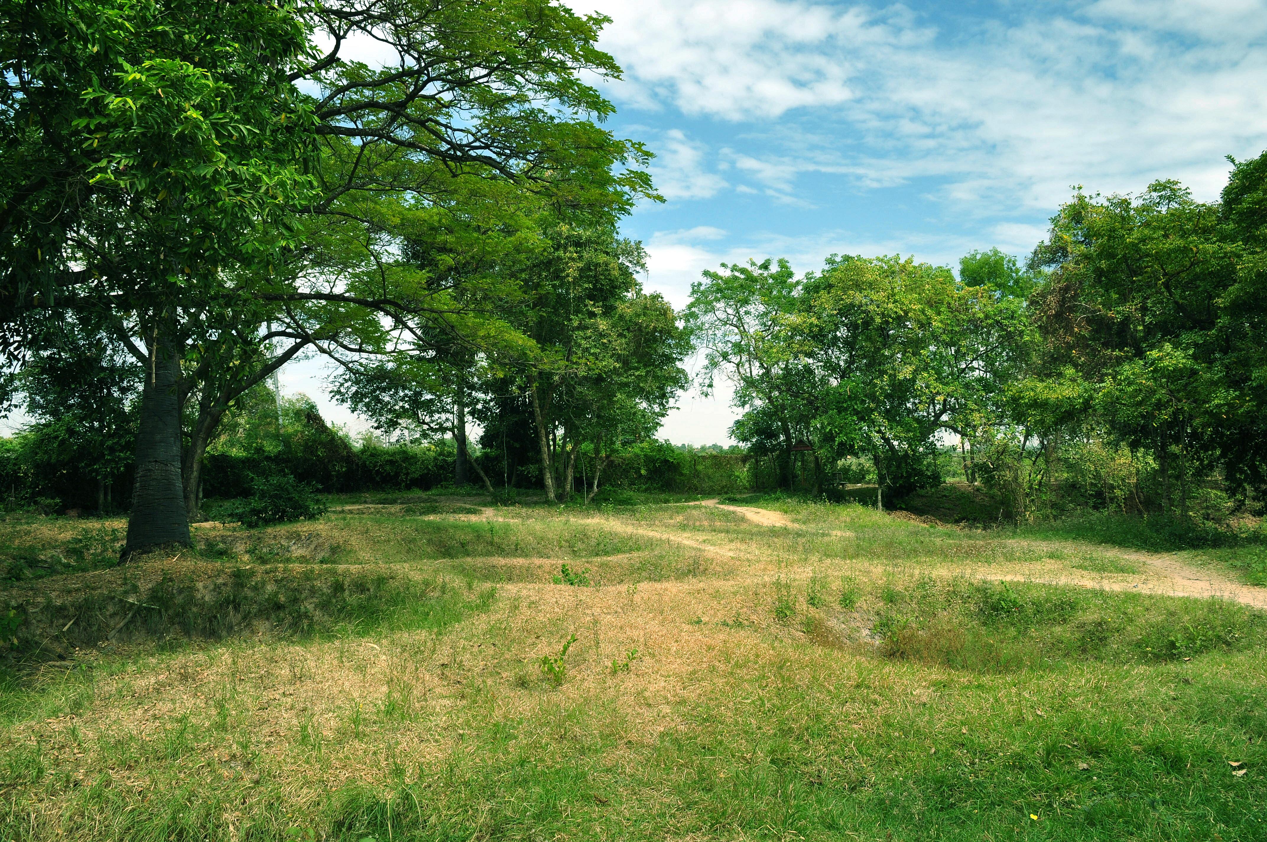 Meadow Trees Sky Landscape Wallpaper 4288x2848 182277