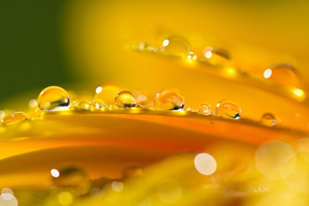 petals drops reflection wallpaper