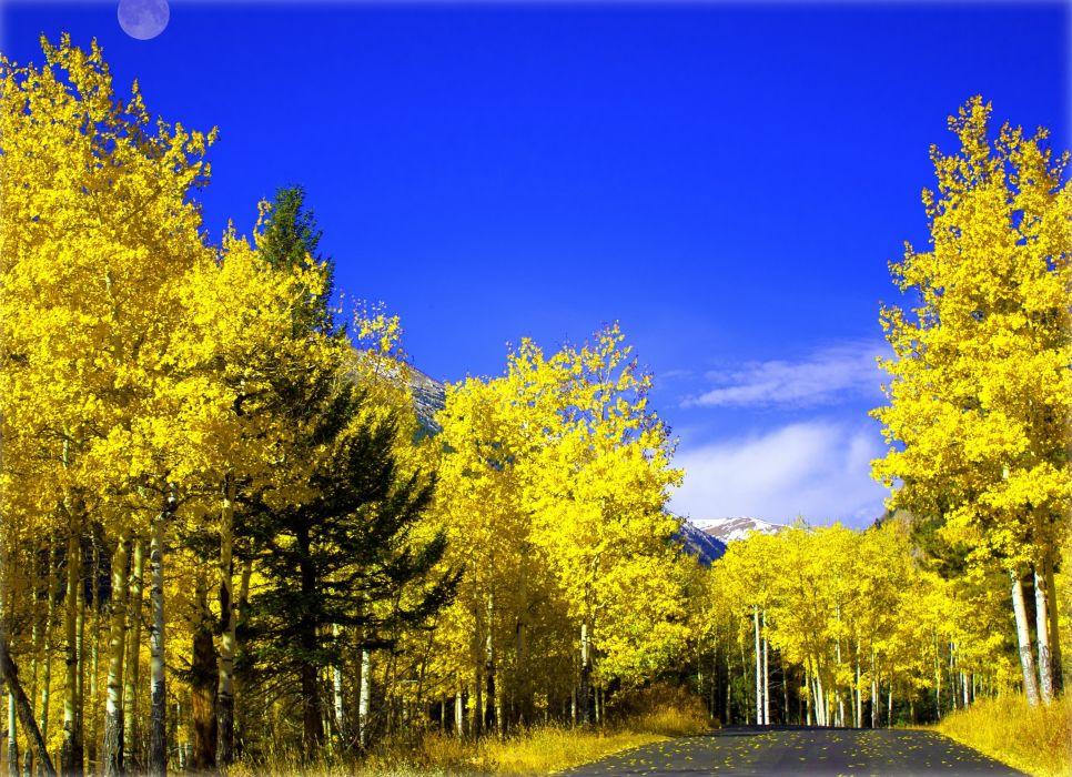road autumn trees landscape wallpaper