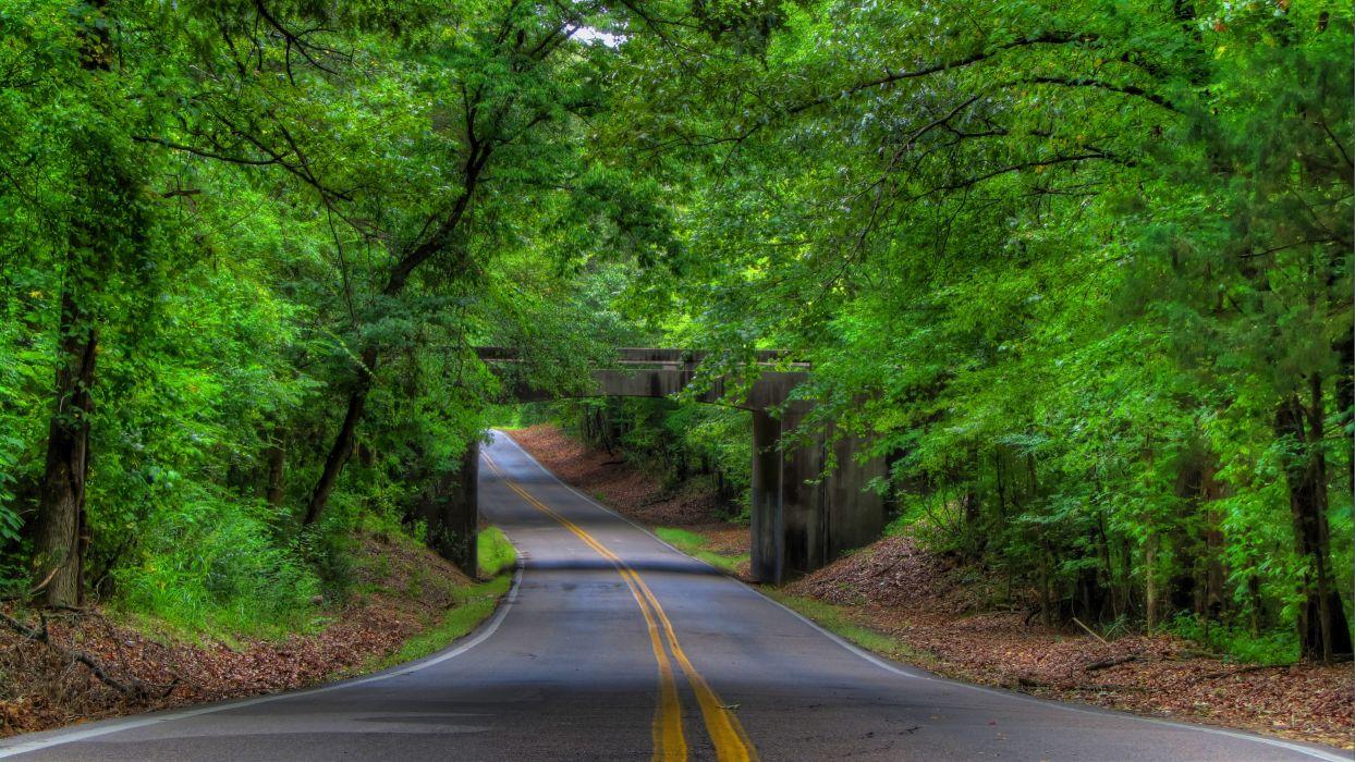 road trees bridge landscape tree forest     f wallpaper