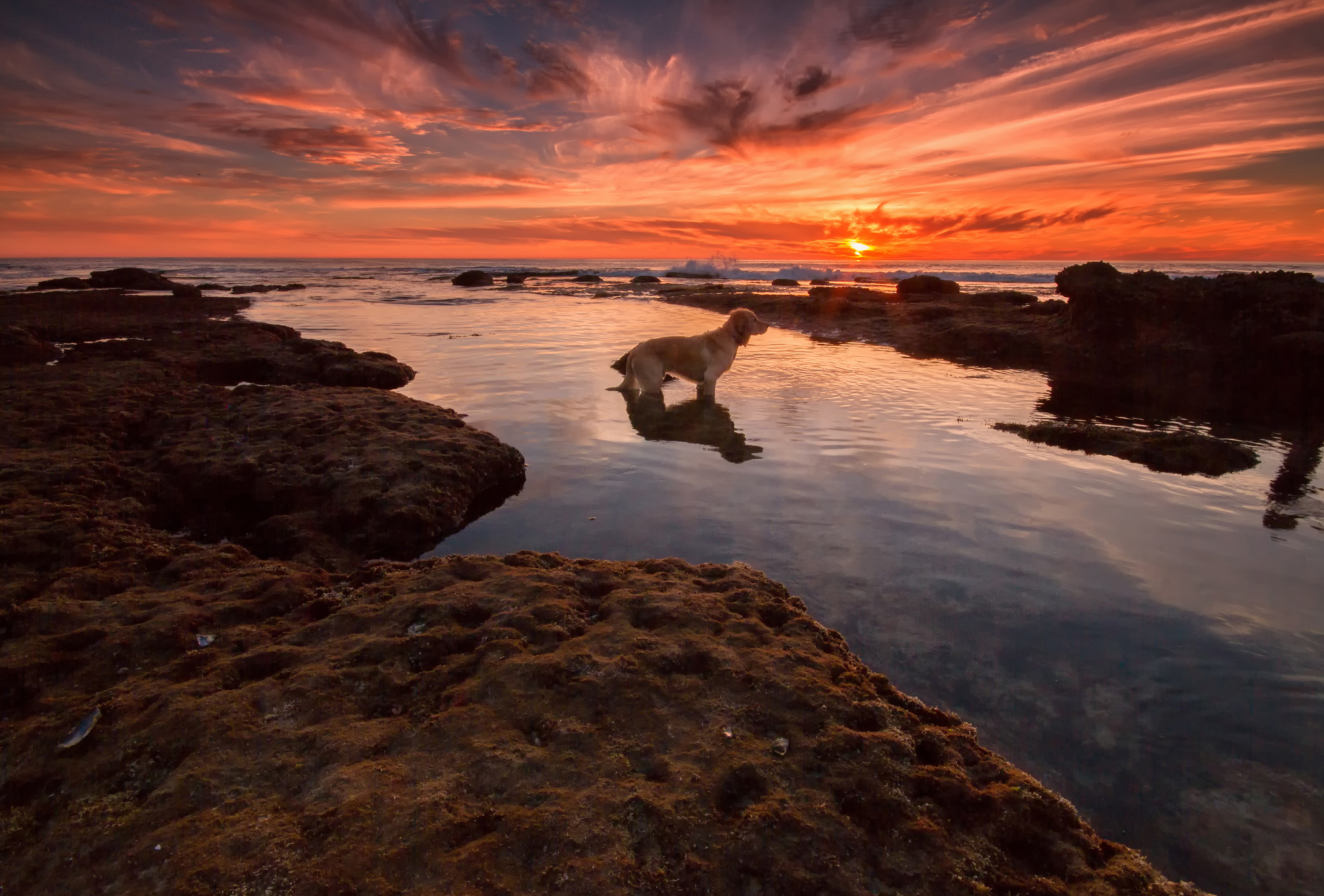 seaaeyaey waiting beach dog sunset wallpaper | 2048x1386 | 182380
