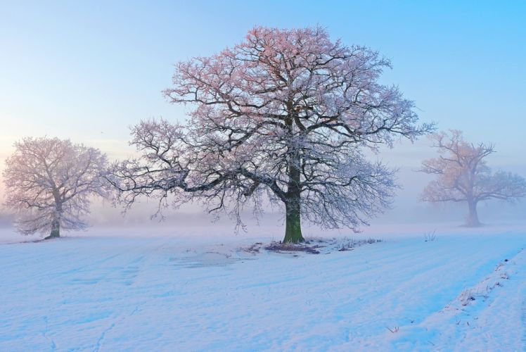 winter snow trees frost morning fog frost wallpaper