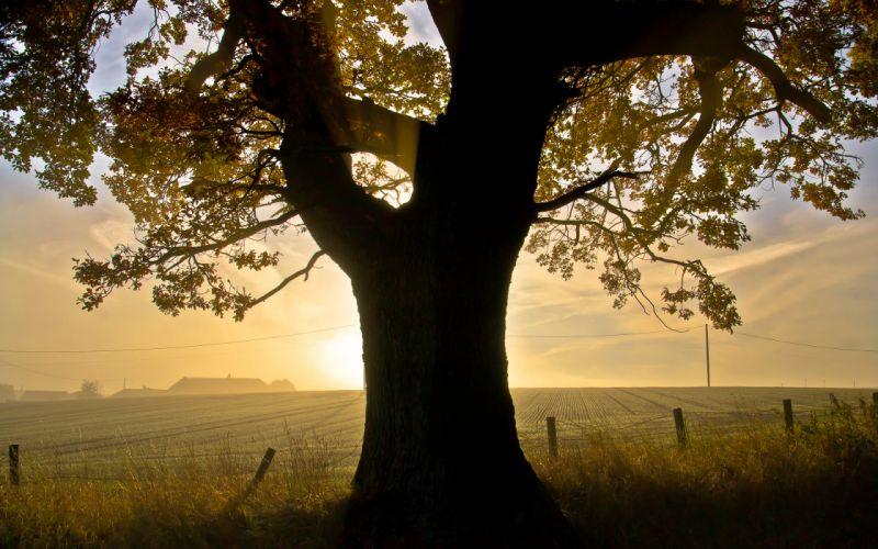 Tree Sunlight autumn Fence wallpaper