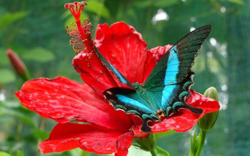 red flowers macro butterflies wallpaper