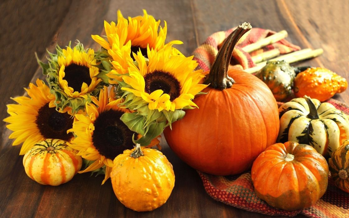 flowers fruits harvest sunflowers pumpkins Squash cloth wallpaper