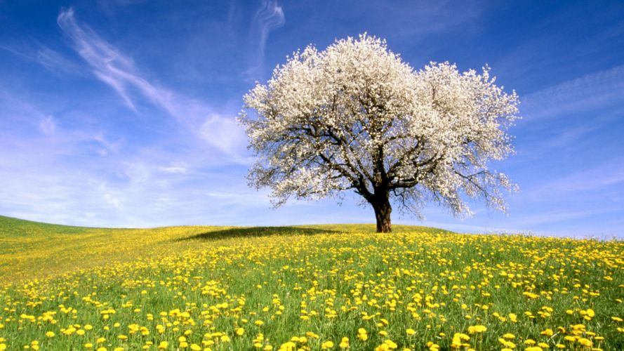 trees flowers meadows wallpaper
