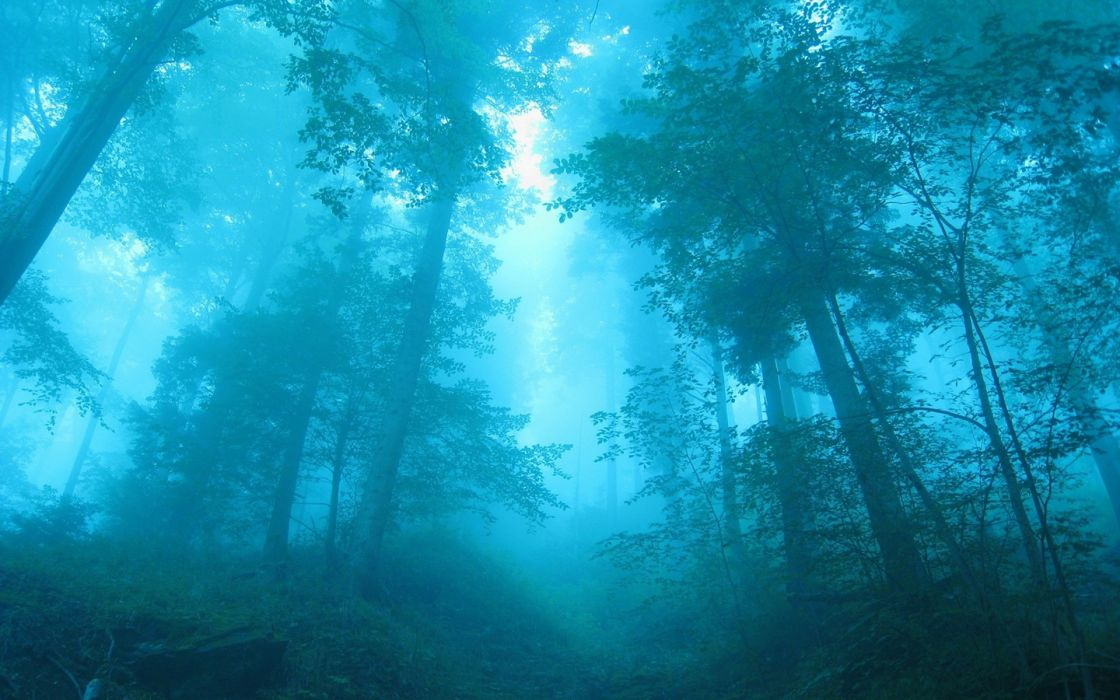 blue forests mist wallpaper