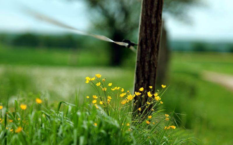 fences grass wallpaper