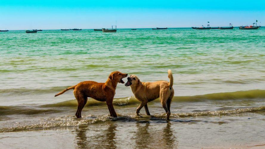 nature animals dogs beaches wallpaper