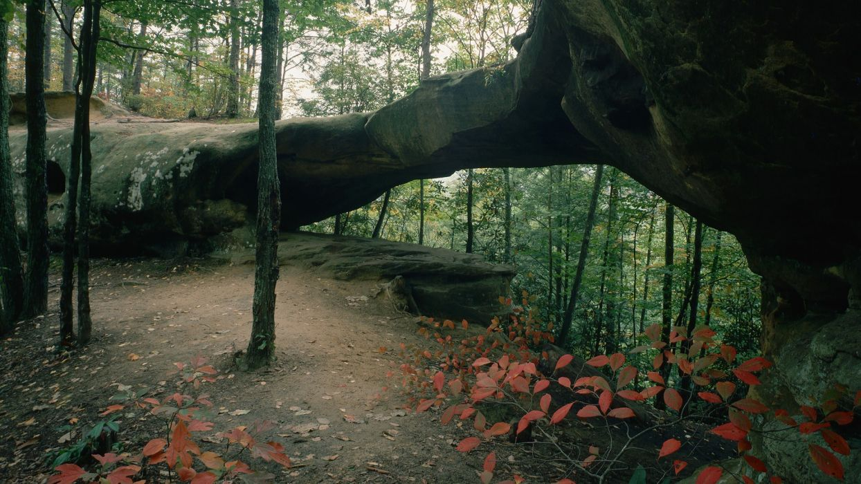 landscapes nature trees forests rocks arch Daniel Boone National Forest wallpaper
