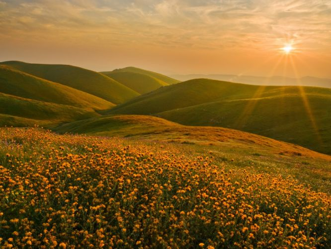 California cluster wildflowers wallpaper