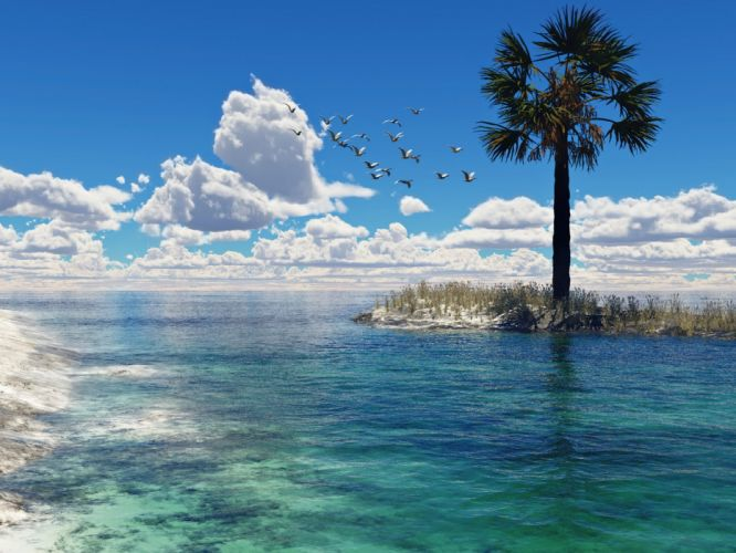nature seagulls palm trees Tyler Young sea wallpaper
