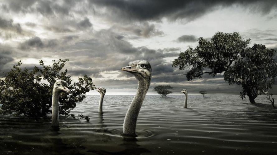trees birds wildlife flood ostrich wallpaper
