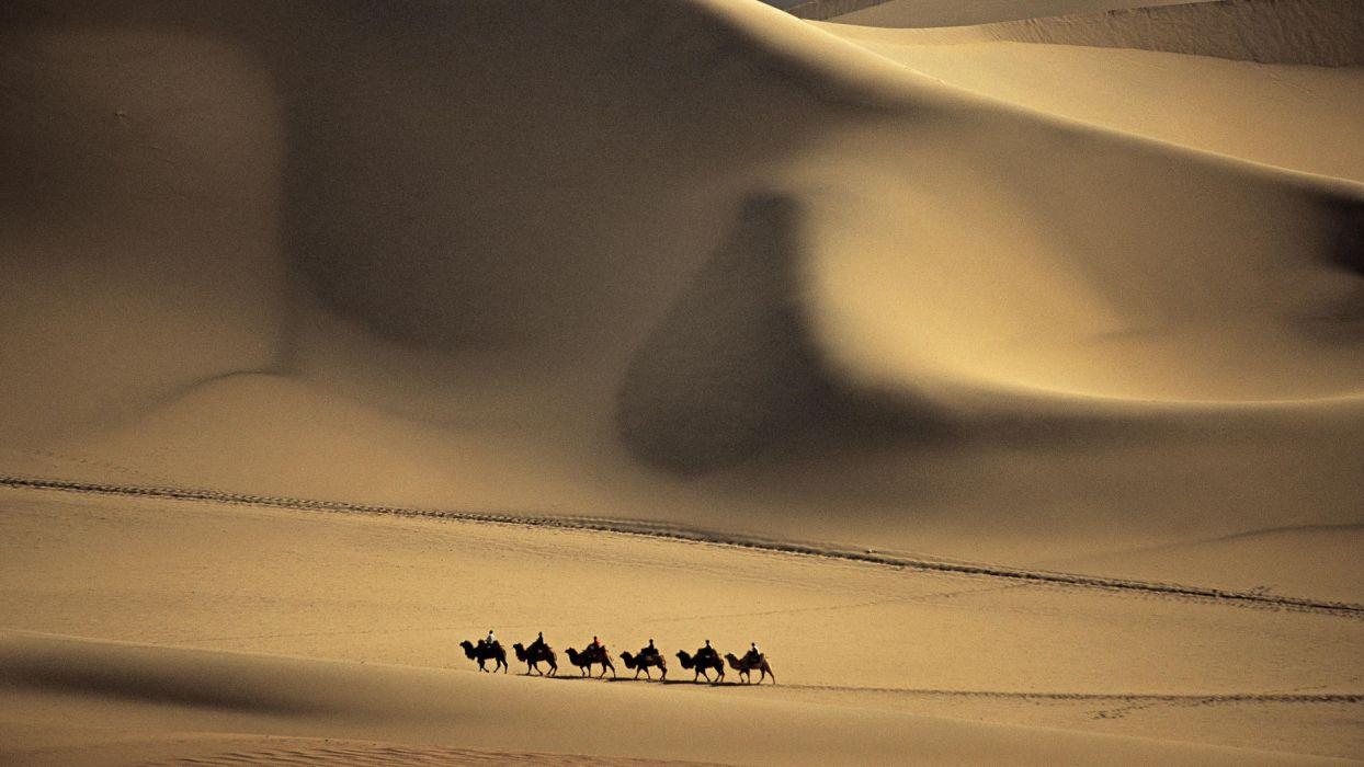 nature sand deserts camels dunes wallpaper