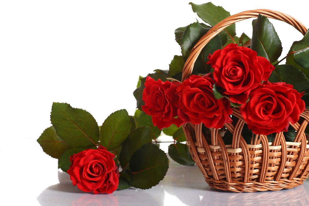 Roses Red Wicker basket Flowers wallpaper