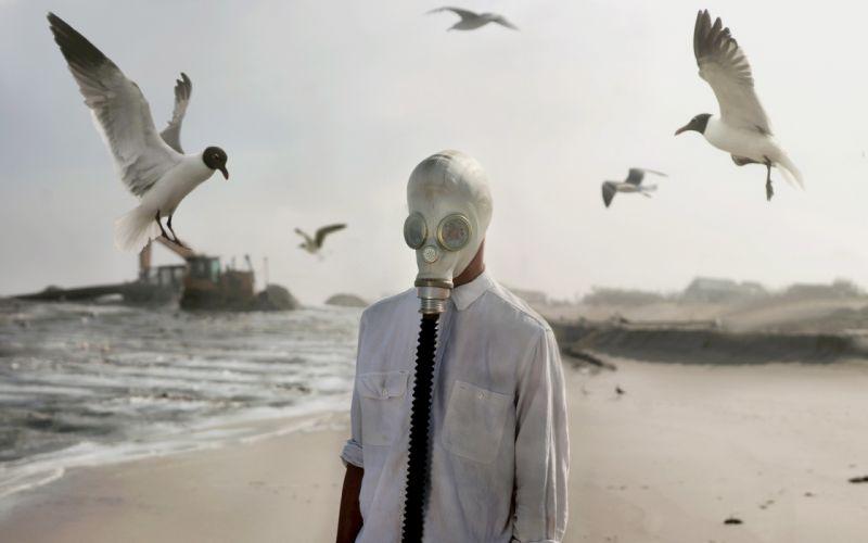 Gull Birds Gas mask Beach Formal shirt f wallpaper