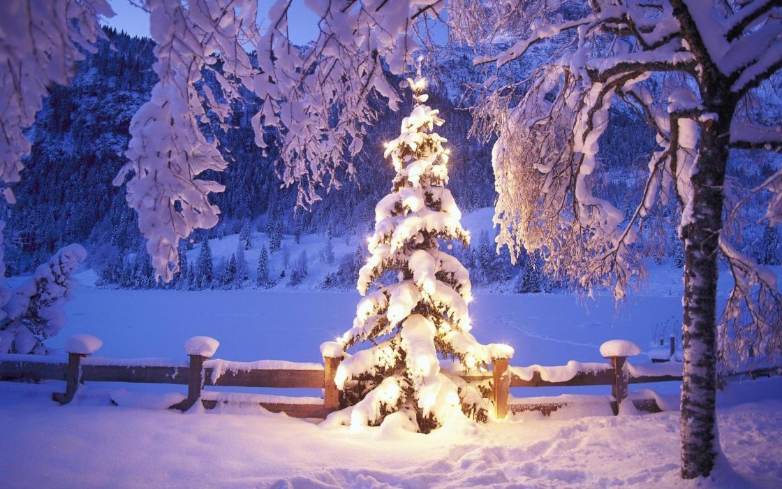 Christmas winter snow forest      g wallpaper