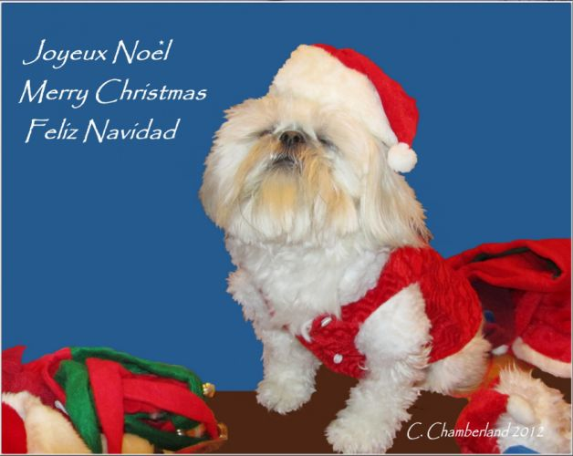 Joyeux Noel r[ wallpaper
