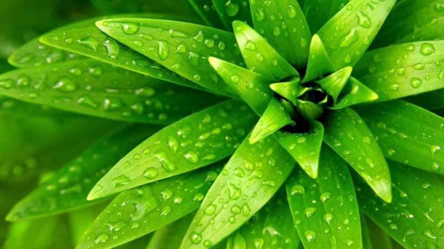 green nature plants flat wallpaper