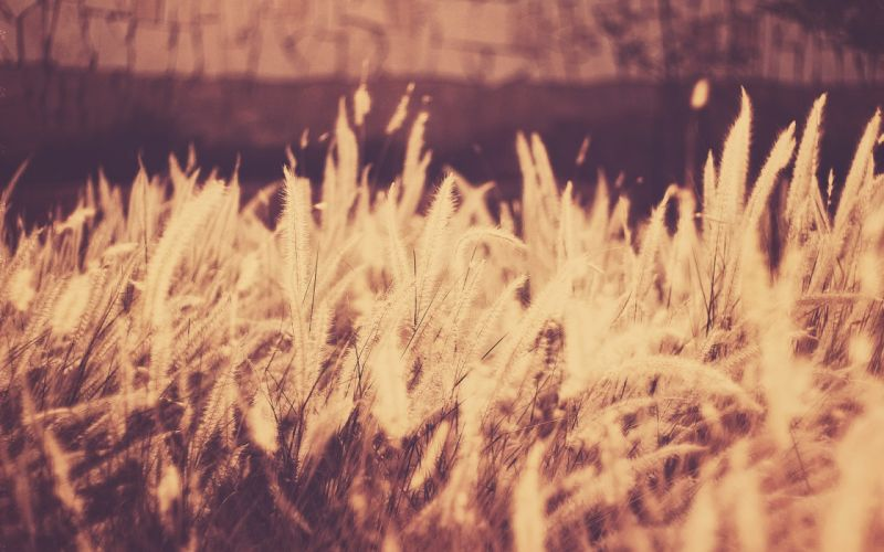 nature grass photo filters wallpaper