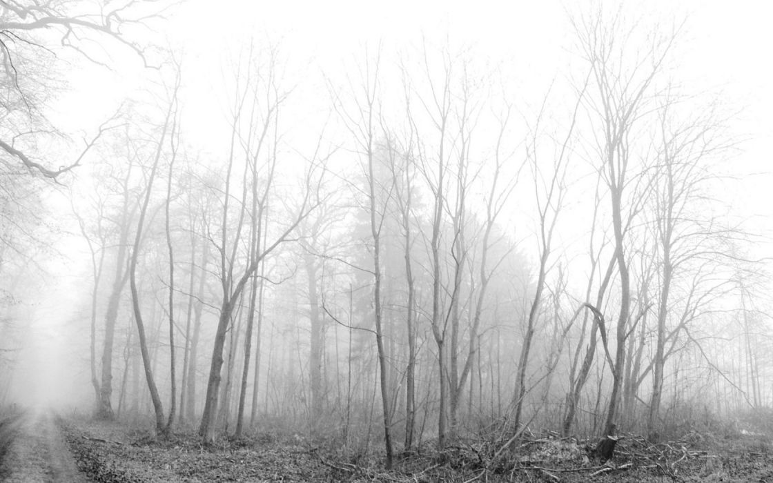 trees forests fog monochrome wallpaper