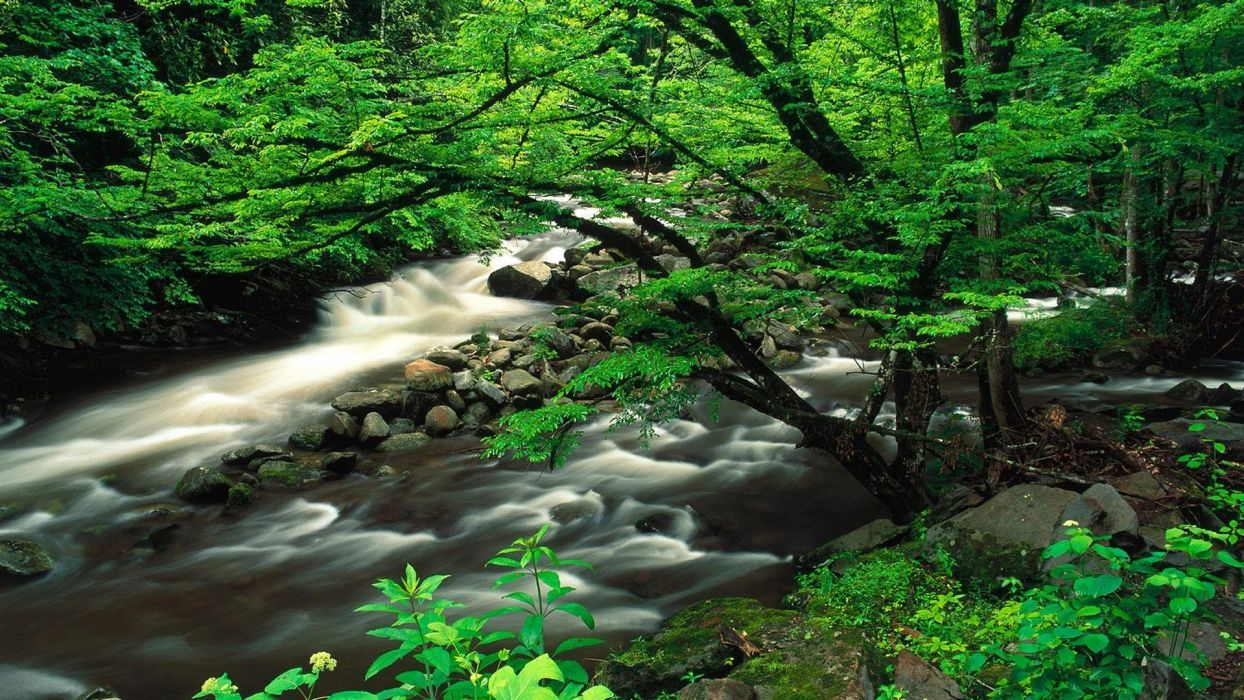 landscapes Tennessee National Park Great Smoky Mountains wallpaper