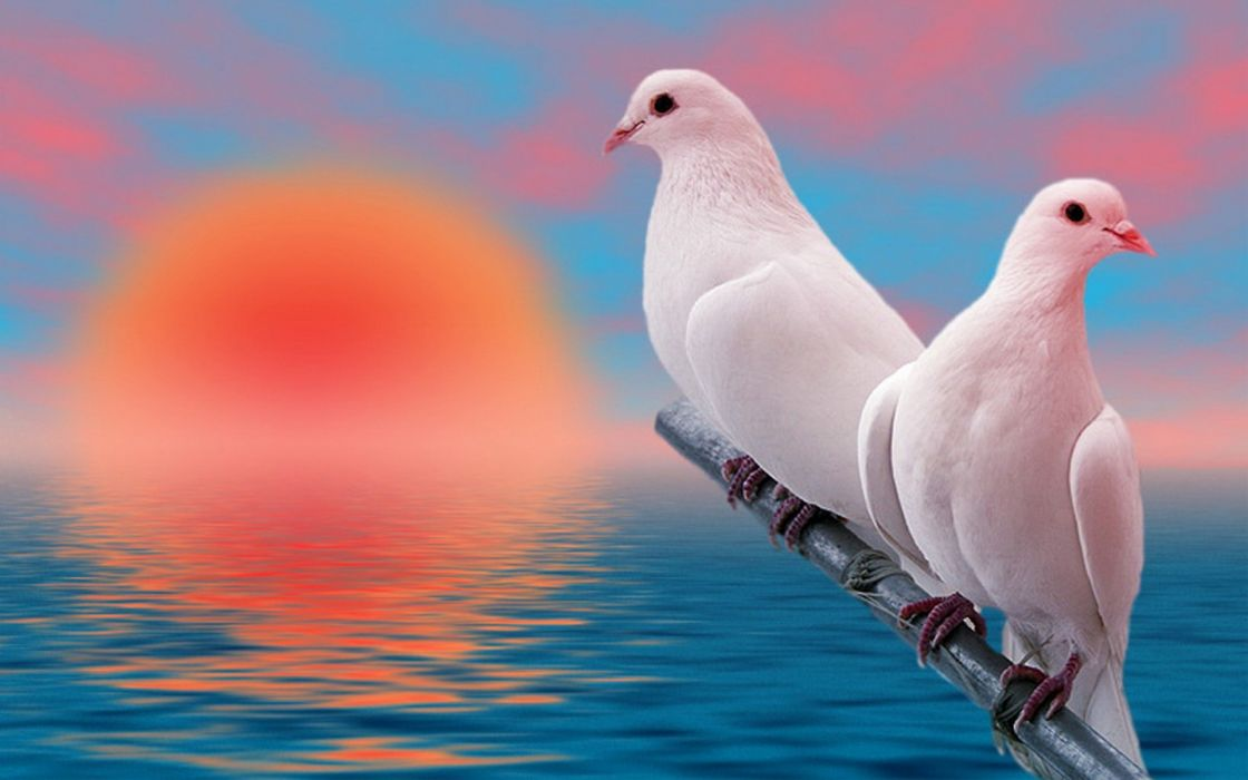 sunset birds doves sea wallpaper
