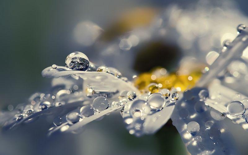 flowers raindrops wallpaper