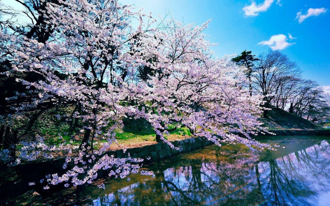 Japan Landscapes Nature Cherry Blossoms Wallpaper
