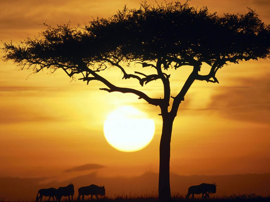 Sun trees animals wildebeest wallpaper