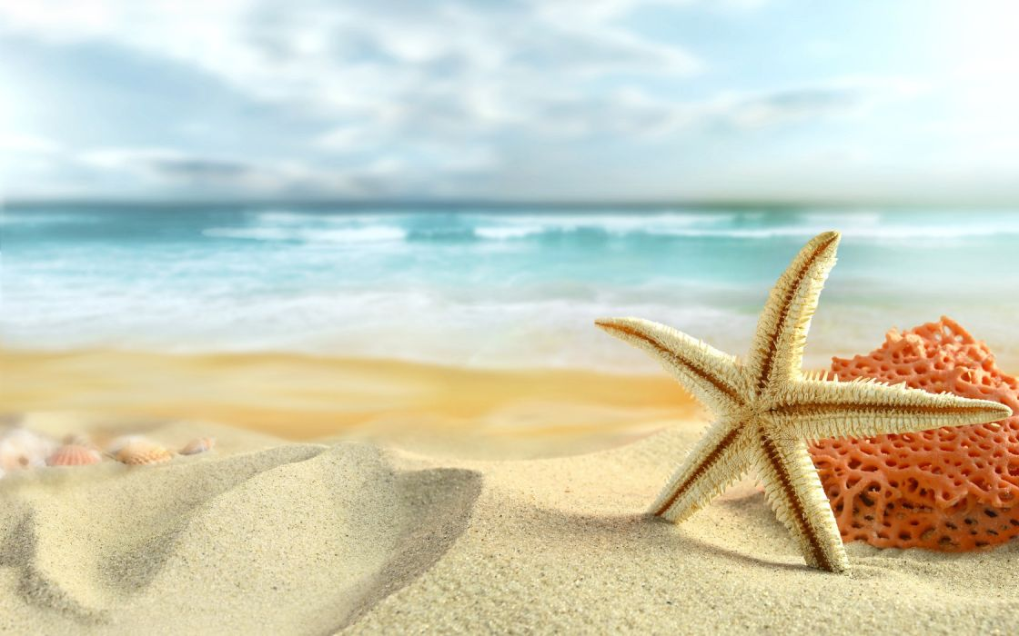 Ocean Sand Stars Starfish Sea Beaches Wallpaper 1680x1050 184243 Beach