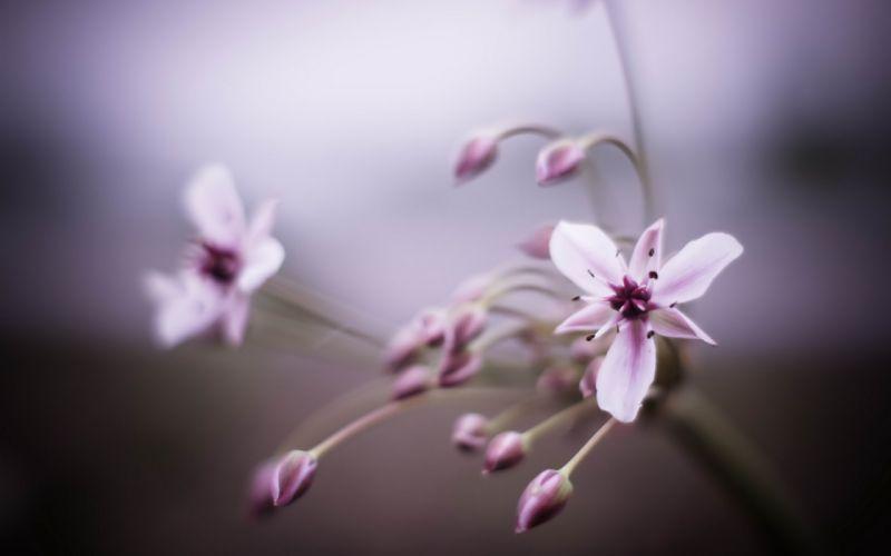 flowers Flora wallpaper