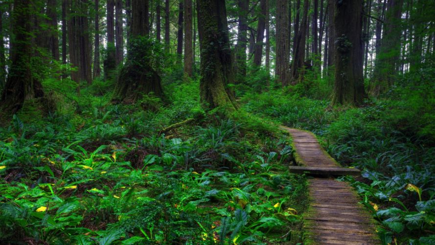 nature forests fairies wallpaper