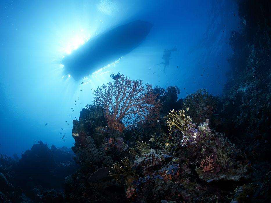 animals fish underwater wallpaper