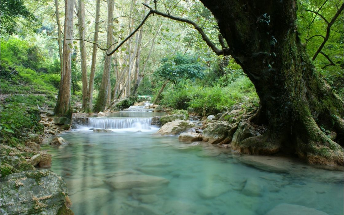 forests rivers wallpaper
