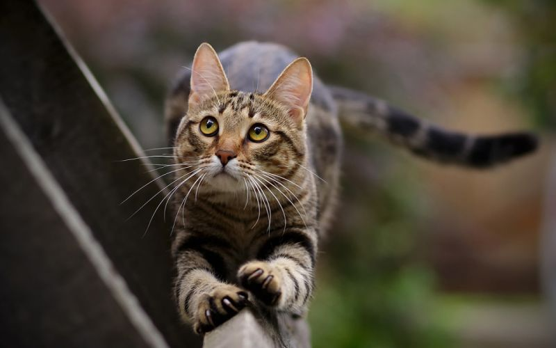 tails cats animals pets cat paws wallpaper