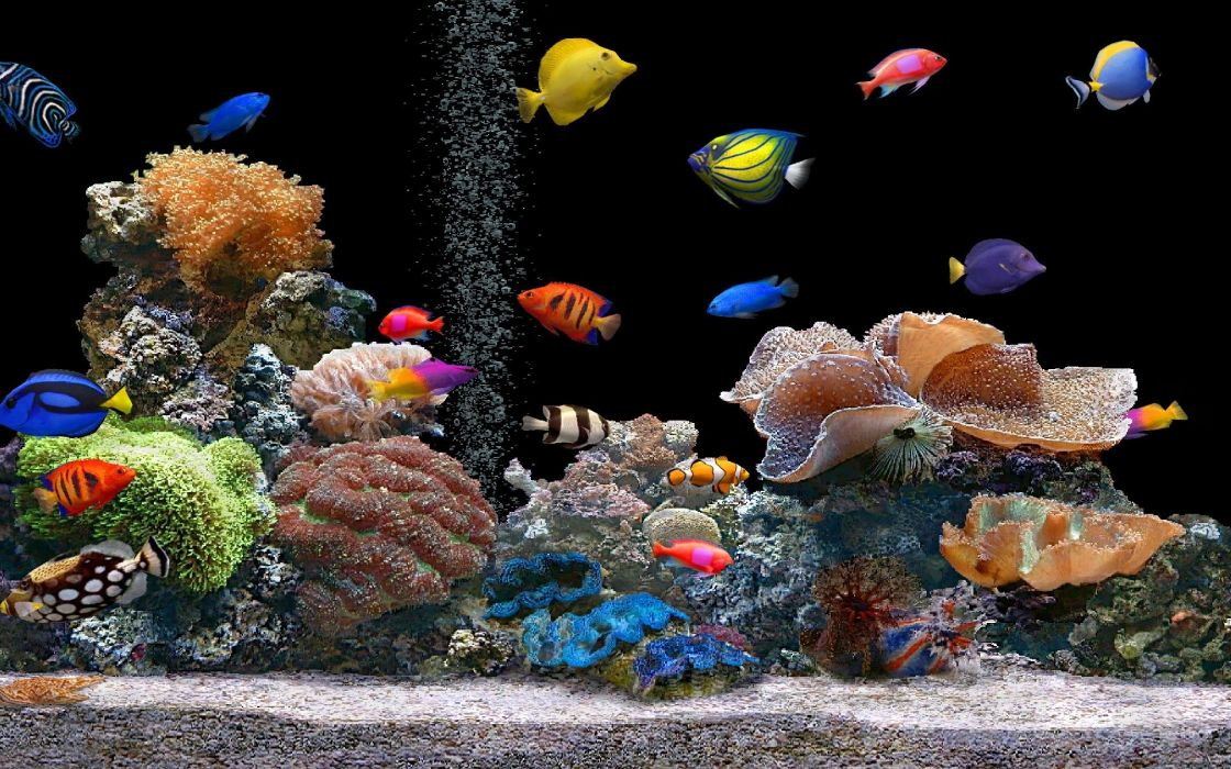 nature animals aquarium coral saltwater fish wallpaper