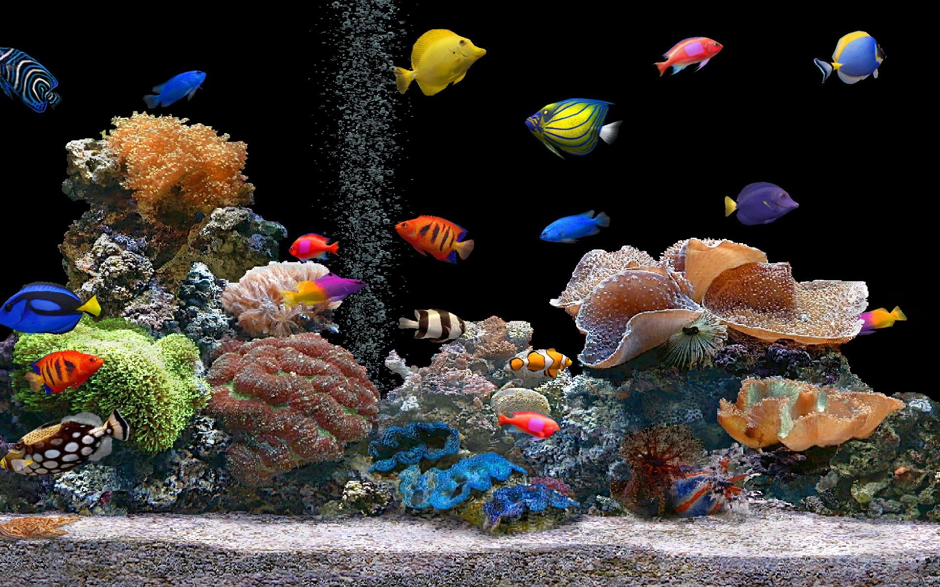 Nature animals aquarium coral saltwater fish wallpaper for Reef tank fish