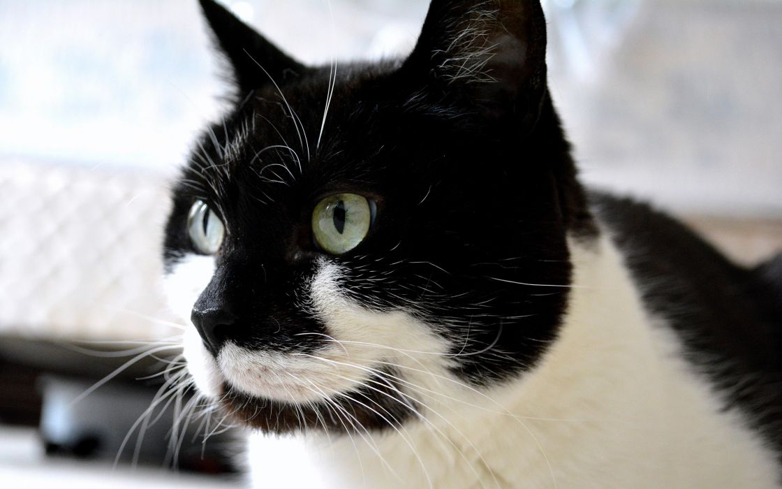 black and white back cats animals wallpaper