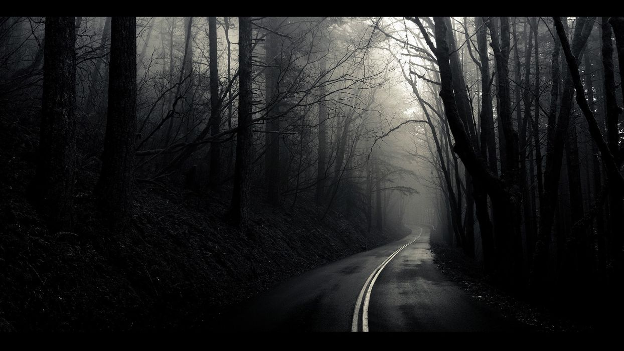 black and white landscapes trees fog mist The Mist roads monochrome path wallpaper