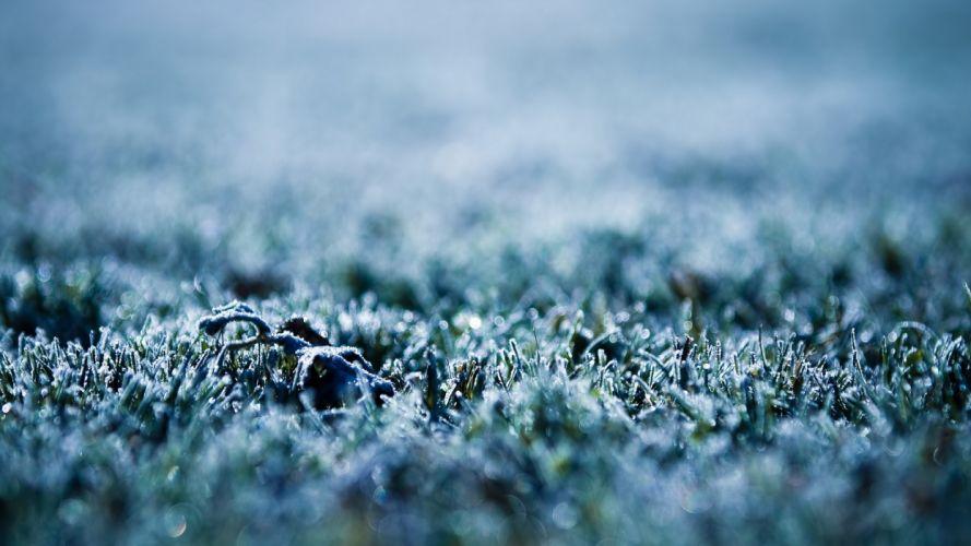 nature grass frozen wallpaper