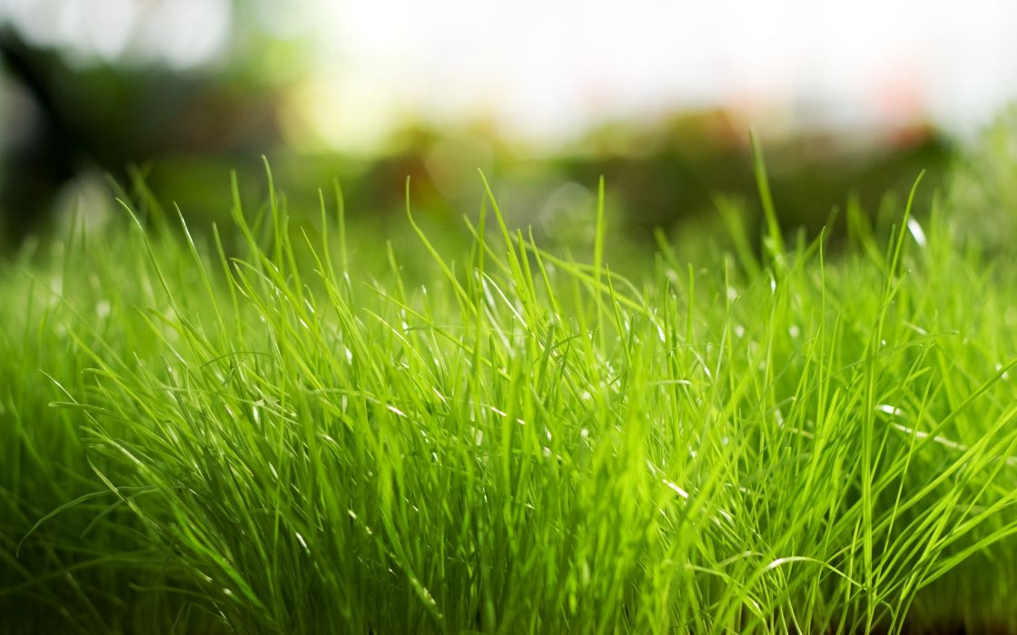 grass sunlight macro wallpaper